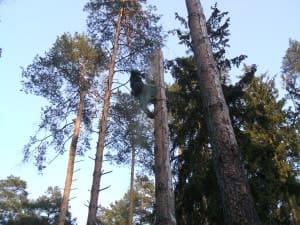Удаление сухостойных деревьев