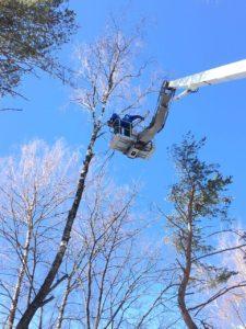 Удалить деревья с помощью спецтехники