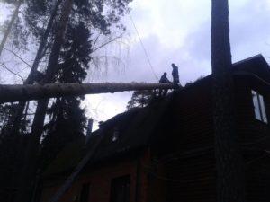 Очистка участка от дерева