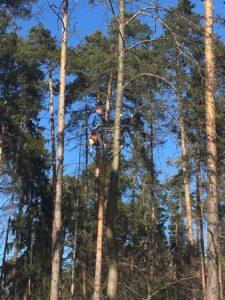 Опиловка деревьев и кустарников