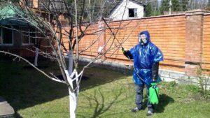 Лечение плодовых деревьев