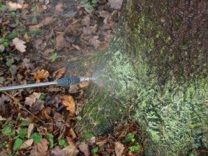 Лечение опрыскиванием поверхности дерева