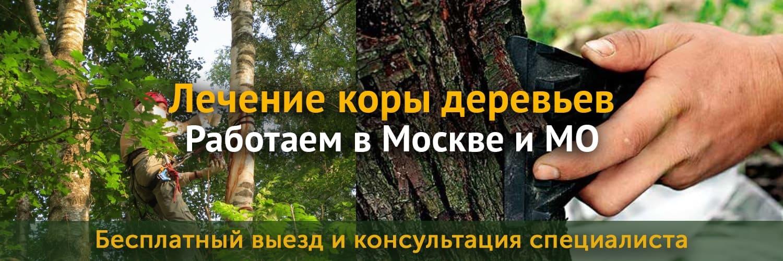 Описание услуги по лечению коры дерева