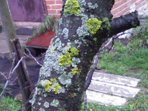 Симптомы заболевания дерева
