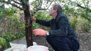 Как вылечить плодовое дерево