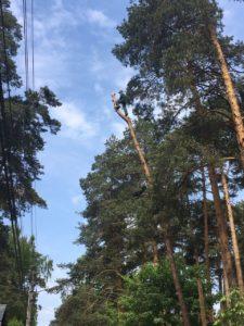 Удаление деревьев в Раменском