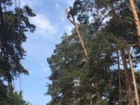 Спил деревьев в Раменском