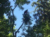 Удаление деревьев по частям