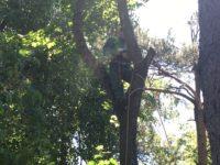 Удаление деревьев с завешиванием арбориста