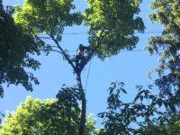 Валка деревьев в Раменском районе