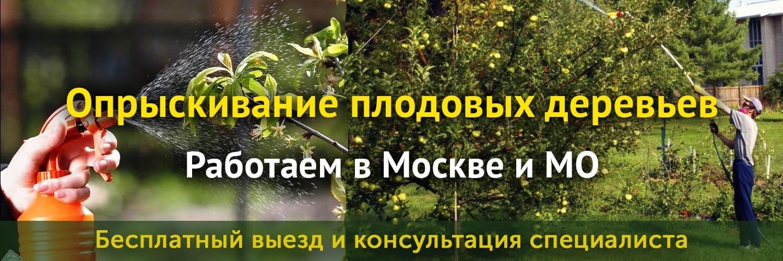 Услуги по опрыскиванию плодовых деревьев
