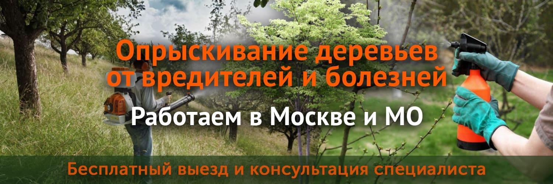 Опрыскивание деревьев от вредителей и болезней в Москве и МО