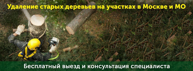 Вырубка старых деревьев на территории Московской области
