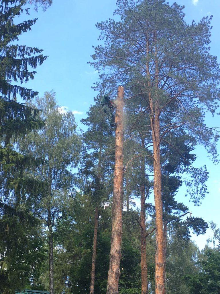 Удаление деревьев в Жуковском