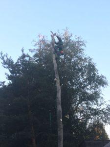 Удаление деревьев в Люберцах и Люберецком районе