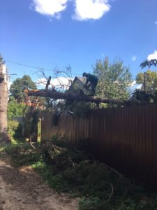 Аварийное дерево повалило забор на участке