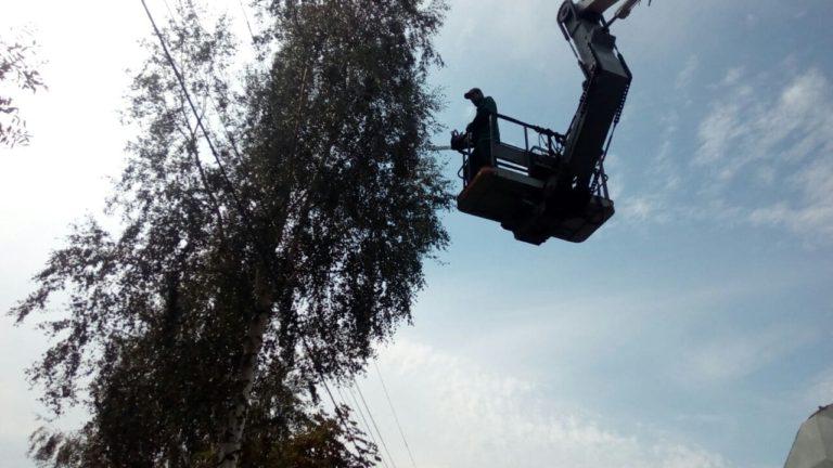 Удаление деревьев в Новохаритоново
