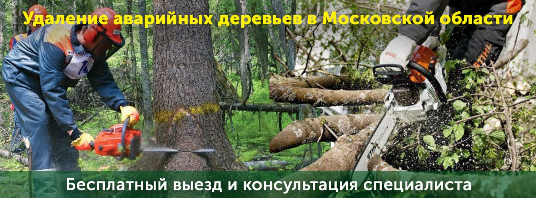 Услуги по спилу деревьев в аварийном состоянии