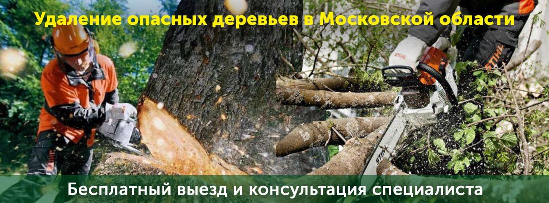 Услуги по спилу и валке деревьев в опасном состоянии