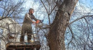Удаление аварийного дерева с крана