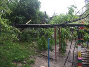 Опсное дерево упало на детскую площадку