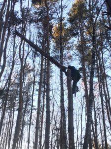 Валка деревьев в Ногинске