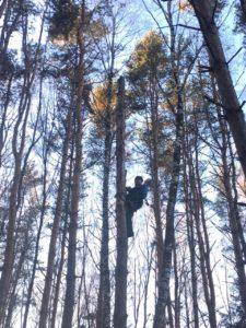 Спиливание дерева с завешиванием