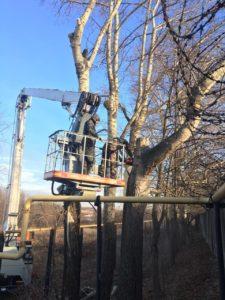 Спиливание деревьев по частям