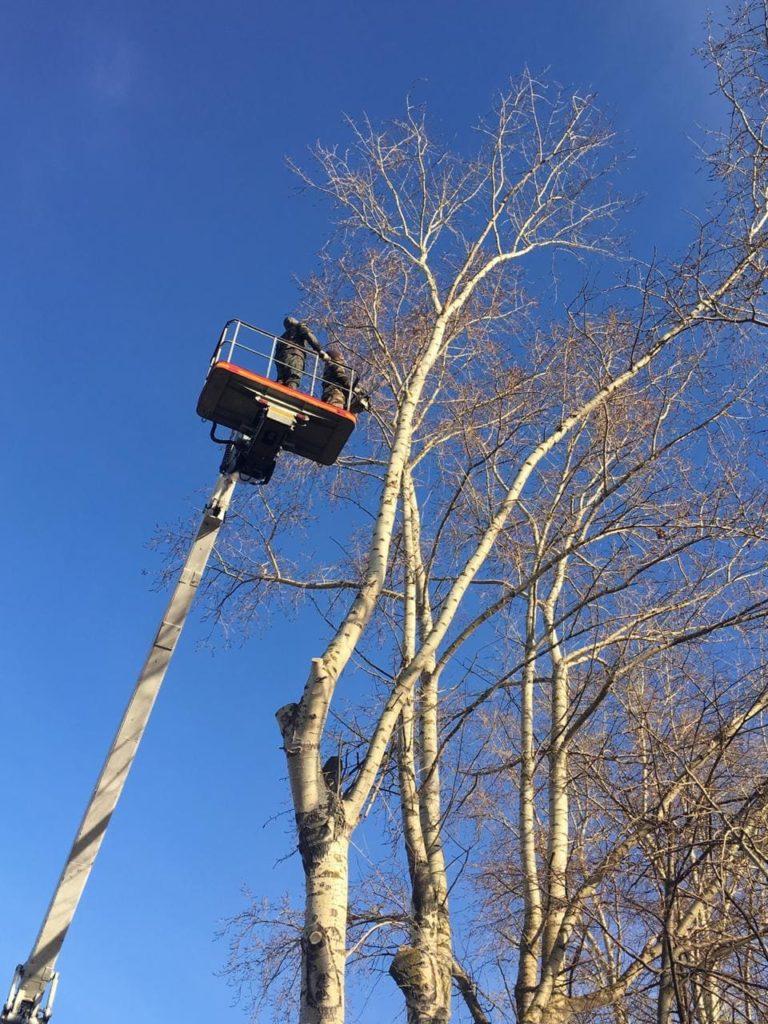 Валка дерева в Балашихе