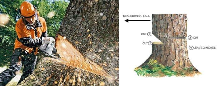 как правильно валить деревья бензопилой