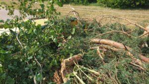 Вывоз веток от деревьев
