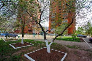 Как правильно посадить деревья возле дома