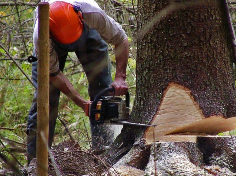Незаконная вырубка деревьев