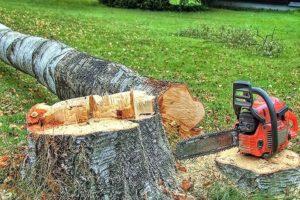 Штраф за спиленное дерево