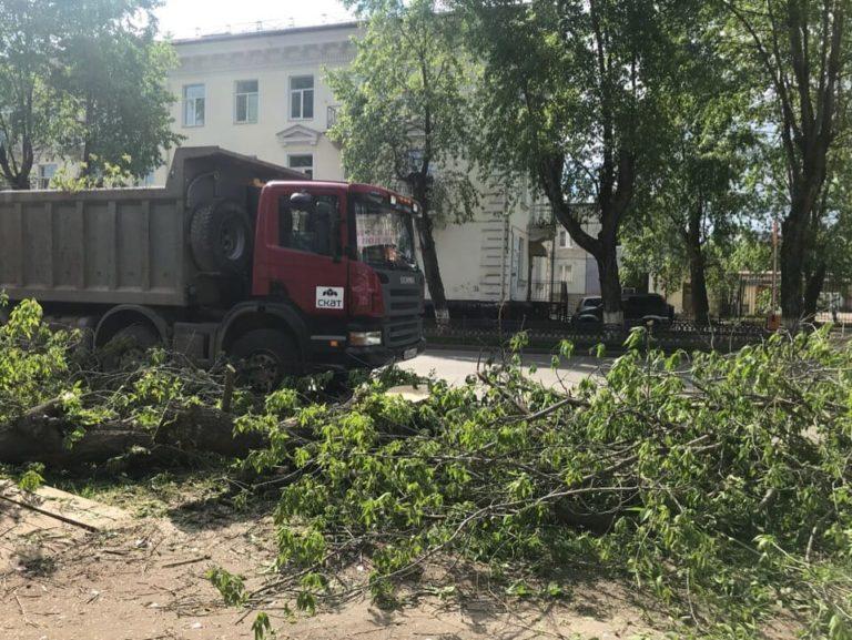 Спил деревьев во дворе многоквартирного дома