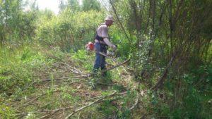 Удаление кустарников и мелких деревьев
