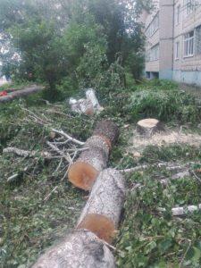 Вырубка деревьев на придомовой территории